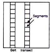 BELT TRANSECT
