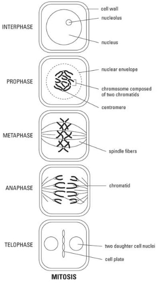 REPRODUCTION IN PLANTS AND ANIMALS - Form 3 Biology Notes