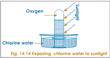 exposing chlorine water to sunlight