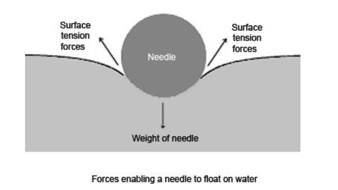 surface tension needle floating on water