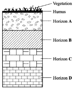soil profile kcse 2010