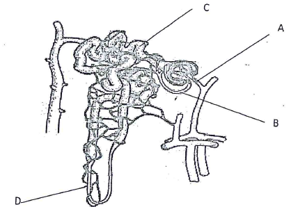 mamallian structure